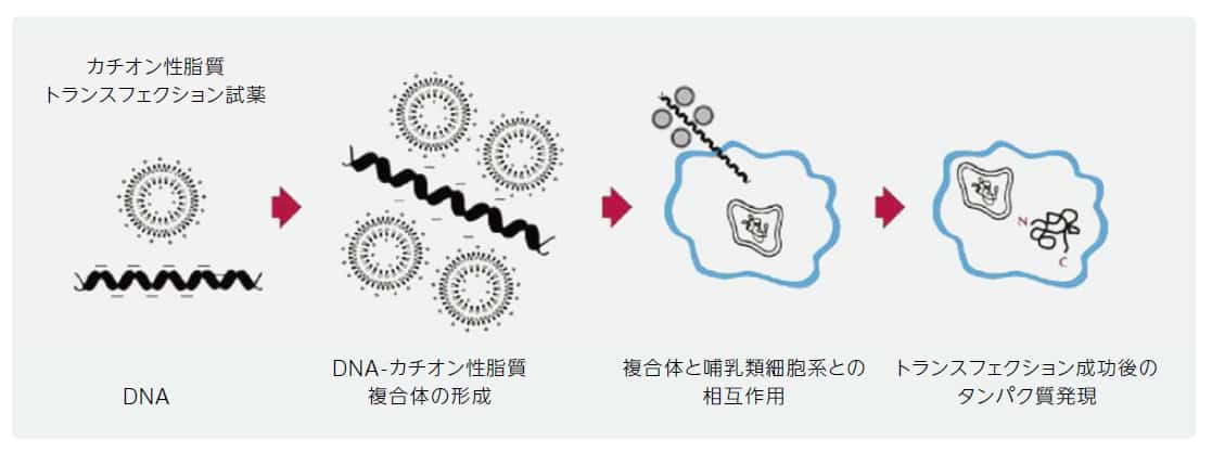 gene-delivery-technologies-fig2
