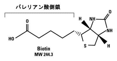 protein-basic10-fig1