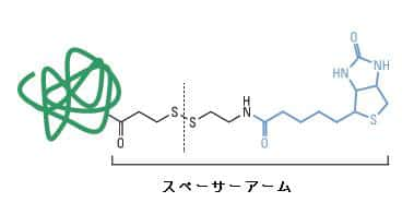 protein-basic10-fig2