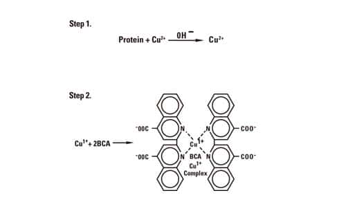 protein-basic4-fig1