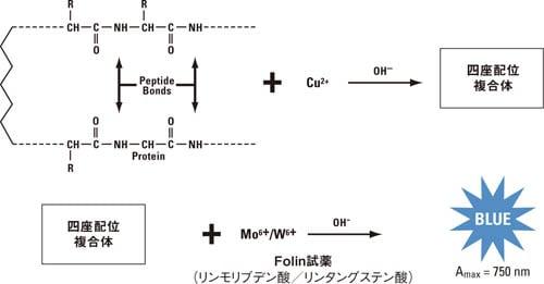 ビウレット 反応 原理