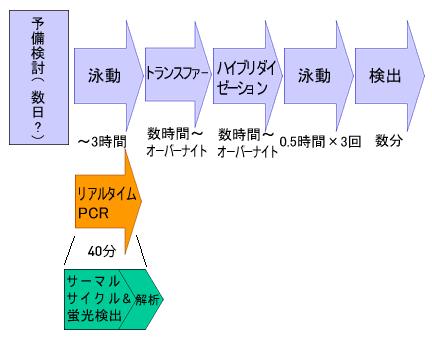 qpcr-basic2-fig1