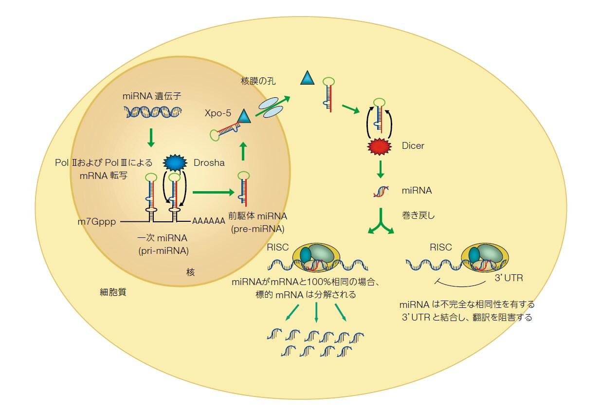 rnai-non-coding-rna-research-fig2