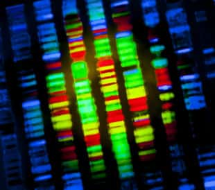 DNA sequence. Image: Gio.tto/Shutterstock.com