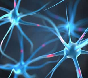 Neurons. Image: Leigh Prather/Shutterstock.com