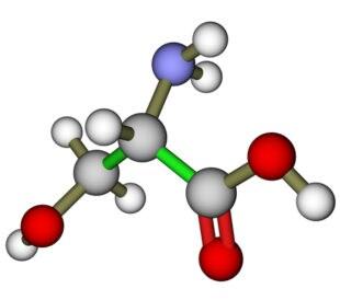 Serine molecule. Image: Leonid Andronov/Shutterstock.com