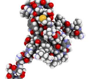 Tau protein fragment. Image: molekuul.be/Shutterstock.com