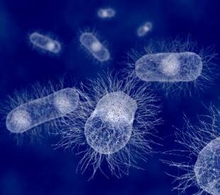 E coli bacteria. Image: Juan Gaertner/Shutterstock.com