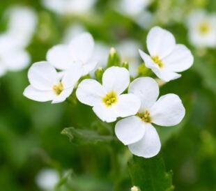 White flowers. Image: Pavel Vakhrushev/Shutterstock.com.