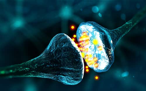 Synapse and neuron cells sending electrical chemical signals (3D illustration). Image: Andrii Vodolazhskyi/Shutterstock.com.