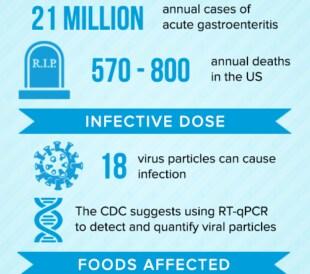 Norovirus inforgraphic