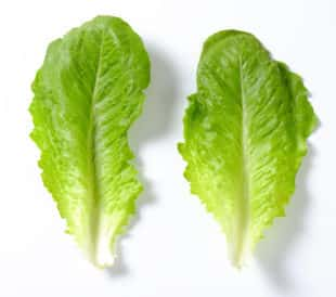 Two pieces of romaine lettuce, isolated on a white background