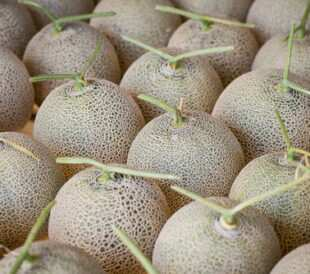 Cantaloupe melons in a market. Image: Background All/Shutterstock.com