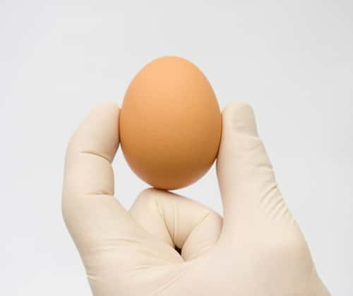 A gloved hand holds a brown egg against a white background. Image: Nemeziya/Shutterstock.com