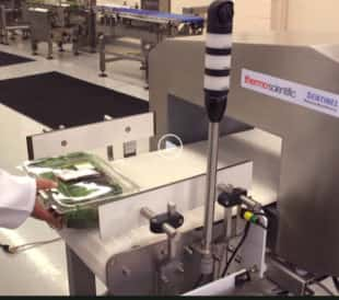 Testing spinach in food metal detector.