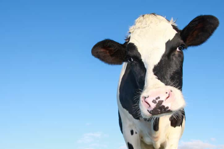 cow and dairy product inspection food safety