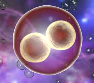Human embryo on the stage of two cells on background with DNA. Image: Kateryna Kon/Shutterstock.com.