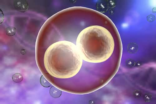 Image result for embryonic cells