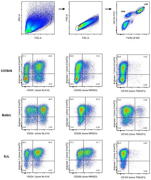 12 panel image, all dot plots. First 3 panels show gating strategy, then 3 panels for Arginase 1 MAb (clone A1exF5) vs. VISIG4 or CD206 or CD163 in either C57Bl/6 cells, Balb/c cells or SJL cells.
