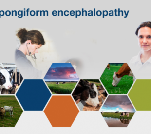 A composite image of researchers and cows headed by the words Bovine Spongiform Encephalopathy