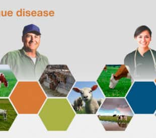 A graphic illustrates Bluetongue disease, with a smiling farmer and veterinarian as well as many cows.