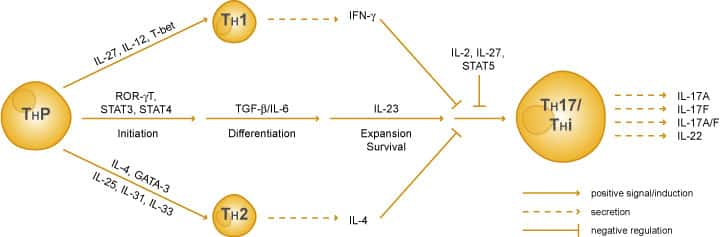 IL 17 AND TH17 CELLS EBOOK DOWNLOAD