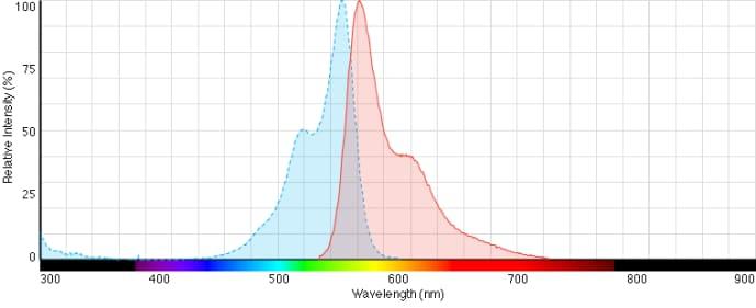Alexa Fluor 555 Phalloidin - Thermo Fisher Scientific