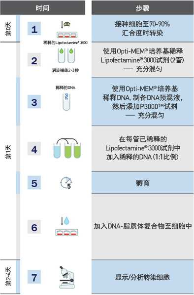 lipo3000全新的转染试剂