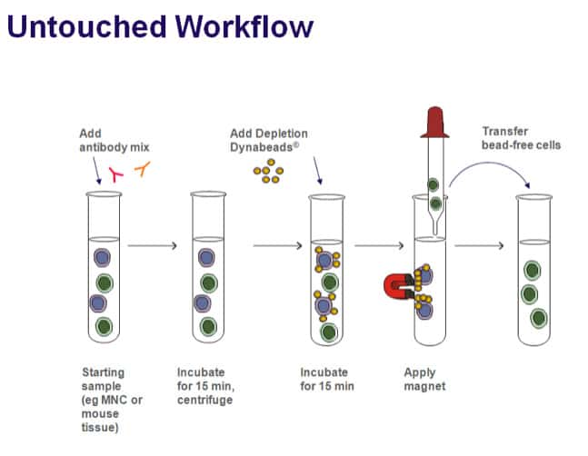 Dynabeads Cell Isolation And Expansion Support Getting