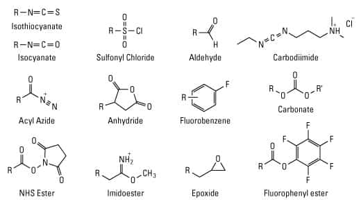 Selected amine-reactive chemical groups