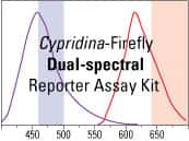 Pierce Cypridina-Firefly Dual Luciferase Reporter Assay Kit