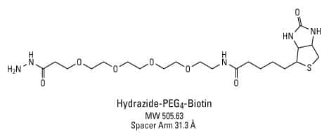 Polyethylene Glycol (PEG) and Pegylation of Proteins