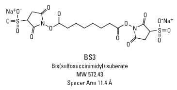 example of a crosslinker: BS3