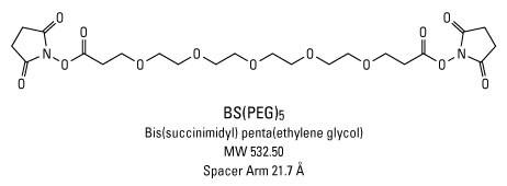 Polyethylene Glycol (PEG) and Pegylation of Proteins