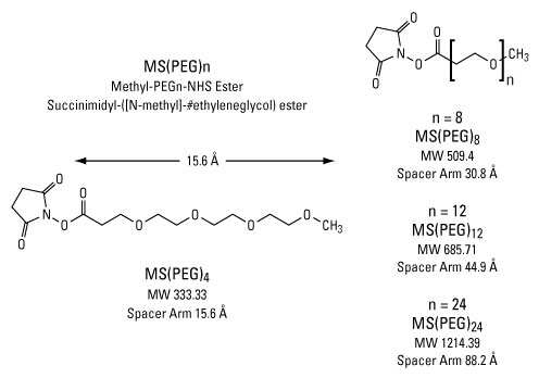 Examples of single chain, amine reactive PEGylation reagents