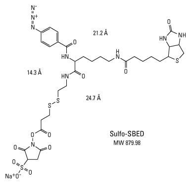 Photoreactive Crosslinker Chemistry | Thermo Fisher