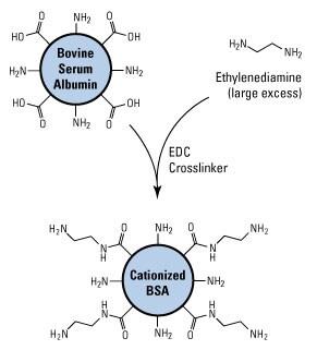 Antibody Production (Immunogen Preparation) | Thermo Fisher