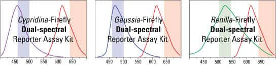 Dual reporter assay kits