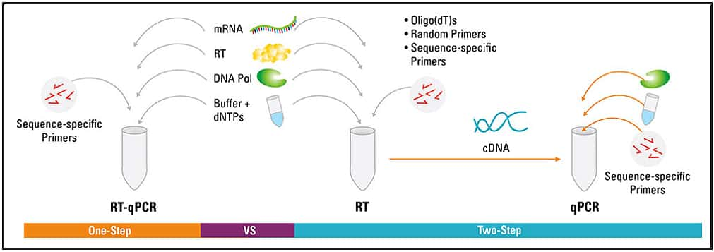 Basic Principles of RT-qPCR | Thermo Fisher Scientific