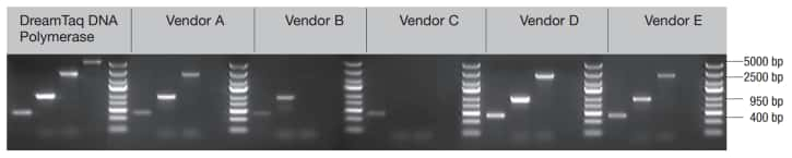 gel image showing amplification of longer amplicons with DreamTaq DNA Polymerase
