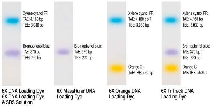 DNA ladders prepared with various loading dye