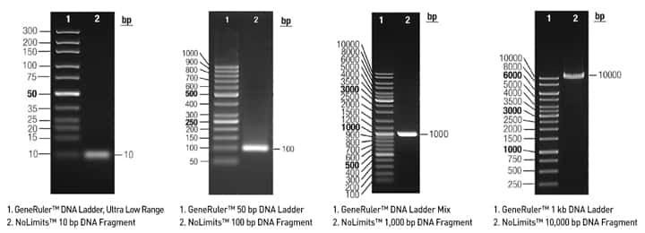 4 representative gel images of NoLimits™ Individual DNA fragments