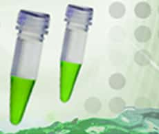 SYBR Green qPCR Master Mixes