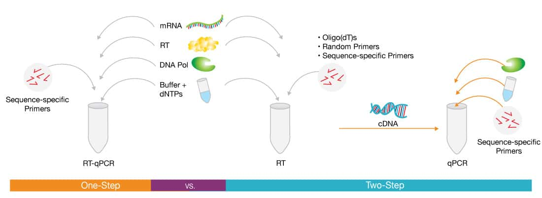Basic Principles of RT-qPCR | Thermo Fisher Scientific - US