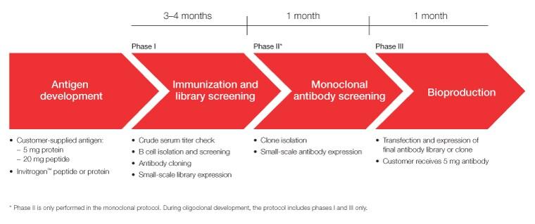 Recombinant Rabbit Monoclonal Antibody Services Thermo
