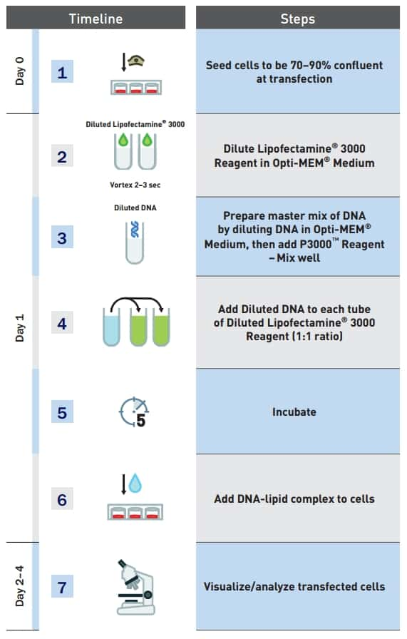 Optimization of Plasmid DNA Transfection | Thermo Fisher