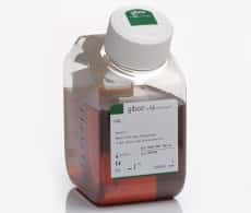 Fetal Bovine Serum (FBS) from Gibco® | Life Technologies