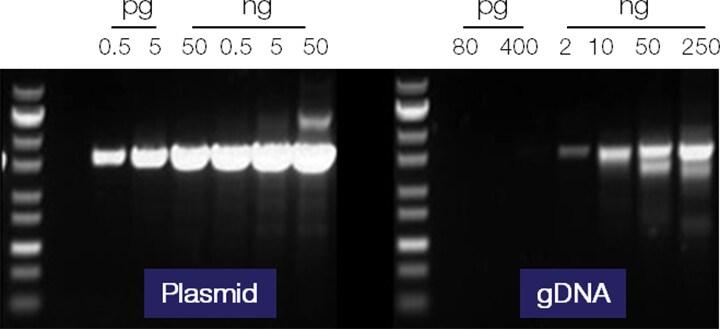 Introduction to pcr primer & probe chemistries | lsr | bio-rad.