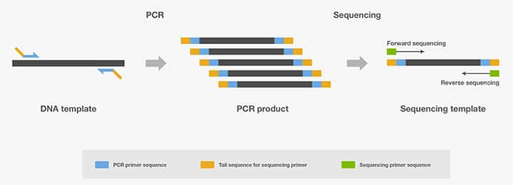 PCR Applications—Top Seven Categories | Thermo Fisher