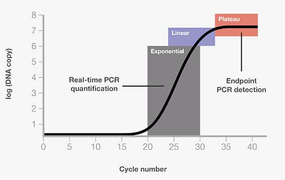 Rapid Cycle Real-Time PCR: Methods and Application